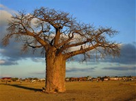 Africa Australe - BOTSWANA 02